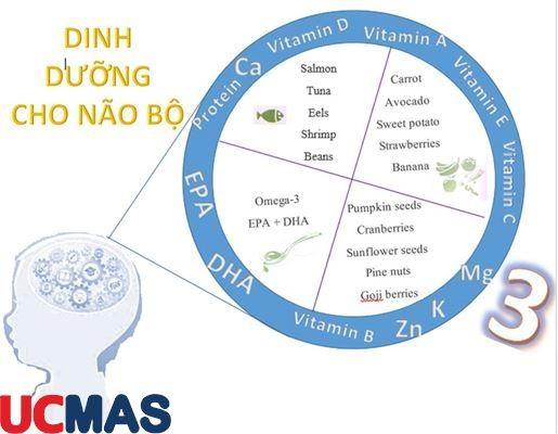 Dinh dưỡng cho các giai đoạn quan trọng trong phát triển não của trẻ